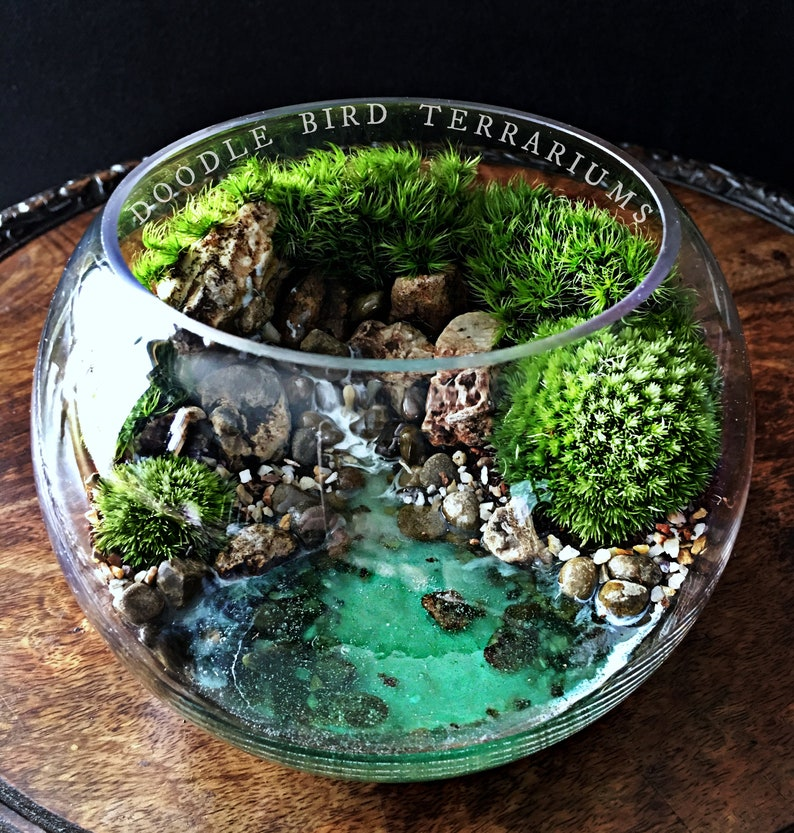 Ocean Scene Bowl Terrarium with Live Plants