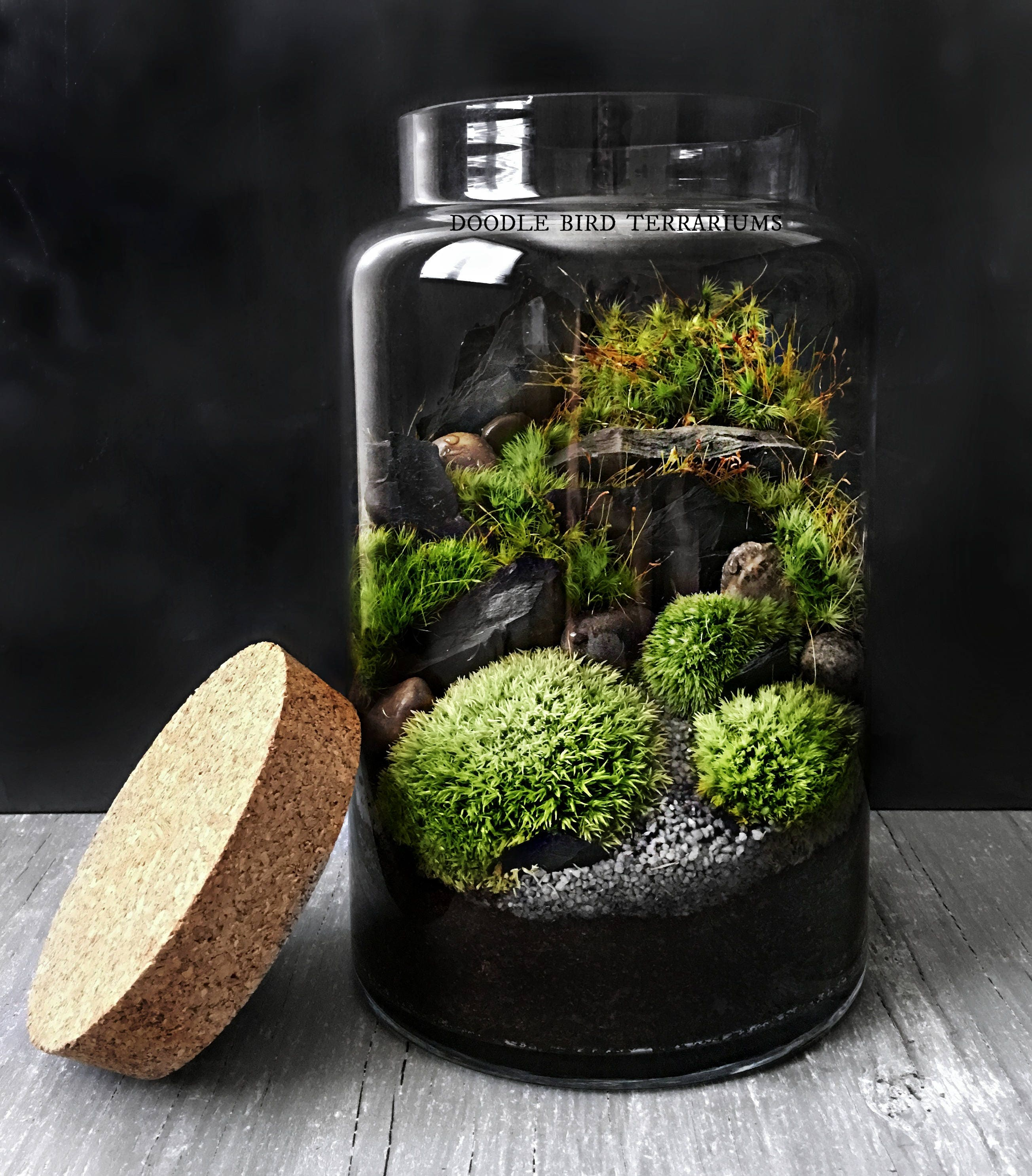 woodland mousse terrarium en verre grand pot de plante etsy. Black Bedroom Furniture Sets. Home Design Ideas