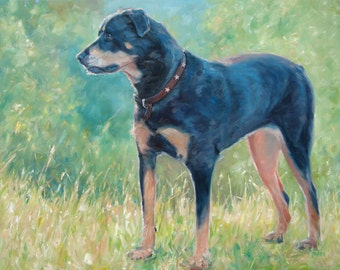 "SummerDog WarmLight, Rotti, custom Pet Portrait Oil Painting by puci, 22x28"""