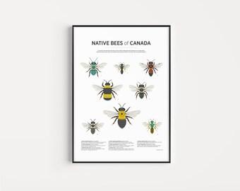 Bee Print | Nature Illustration | Giclée Art Print | 13x19, 17x22