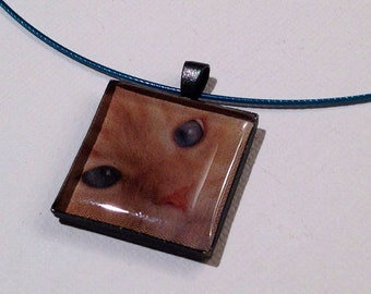 Gato - Cat closeup shot in a gunmetal square resin pendant on a dark blue wire.