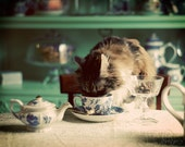 Sipping Milk - 8 x 10 or 5 x 7 Fine Art Photography Print