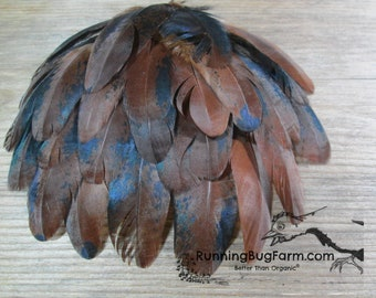 """Wing Feathers Metallic Cruelty Free Feathers Real Bird Feathers Red Feather Loose Organic Feathers Natural Feathers For Crafts Qty 20 3-3.5"""""""