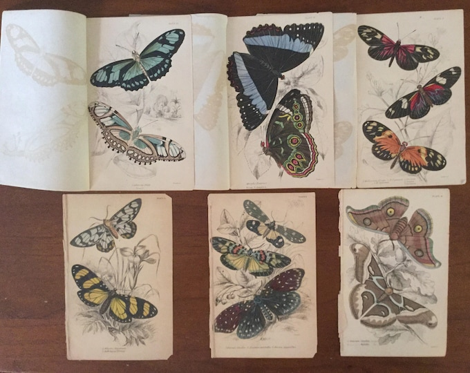 6 William Jardine Genuine Antique Hand Colored Butterfly Moth Prints