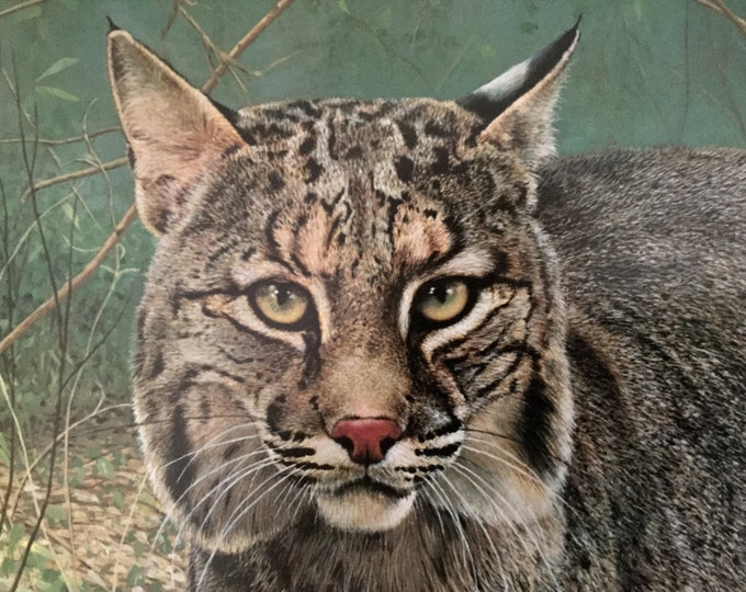 Charles Frace Large Signed Framed Bobcat Wildlife Art Lithograph Print