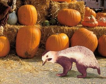 Halloween Photo Card, Pumpkin photo Card, Animal Art Card, Pumpkin Patch Card, Surreal Creature Card,