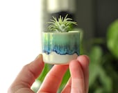 tiny air plant with planter succulent container boho decor small planter with air plant