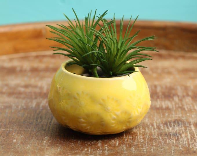 yellow cactus container