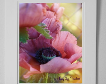 Poppy, Photo Nature,Mauve Poppy, Photography with a retro chic modern look