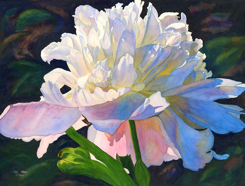 f32ce20841b White Pink Peony Watercolor Painting Print by Cathy Hillegas
