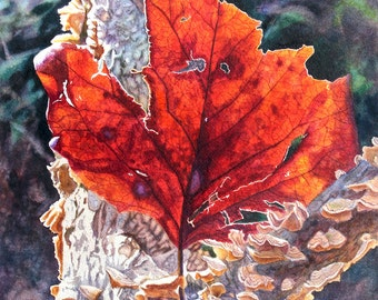 Red Autumn Leaf Watercolor Painting Print by Cathy Hillegas, 8x10 watercolor print, Autumn Tree, Autumn Colors, red, orange, purple, brown