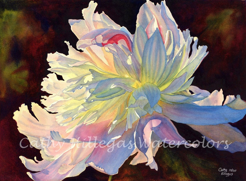 White Peony Art Watercolor Painting Print by Cathy Hillegas image 0