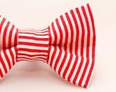 Dapper Cat Candy Cane Str...