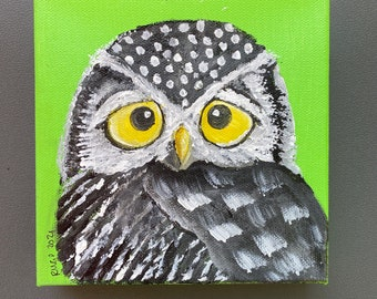 Northern Hawk Owl square acrylic painting