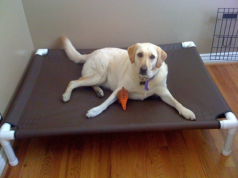 Large Dog Bed Raised Dog Bed Medium Bed Large Dog Bed Cot ...