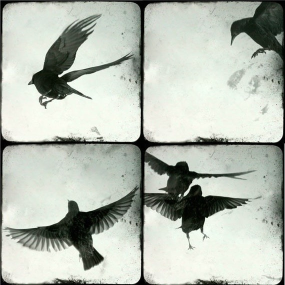 "Birds in flight - four 5""x5"" prints"