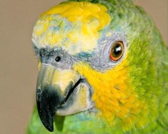 Green and Yellow Parrot Fine Art Print - Nature, Botanical, Wildlife, Garden, Nursery Decor, Home Decor, Baby, Zen, Gift