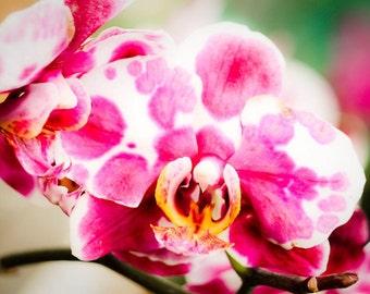 Pink & White Dalmatian Orchid  Fine Art Print - Nature, Botanical, Wildlife, Garden, Nursery Decor, Home Decor, Baby, Zen, Gift