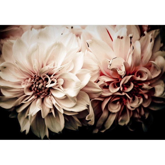 Victorian Pink Flowers Fine Art Print or Canvas Gallery Wrap