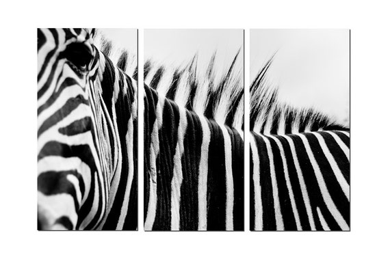 African Zebra Close-up Canvas Triptych, 3 Panel Fine Art, LARGE, Ready to Hang