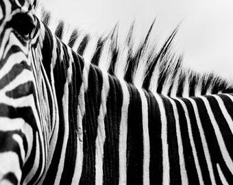 Zebra Back Stripes Black & White Fine Art Print - Nature, Botanical, Wildlife, Garden, Nursery Decor, Home Decor, Baby, Zen, Gift