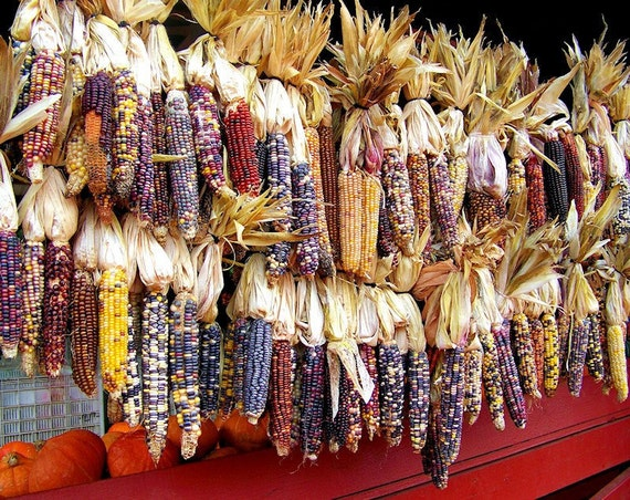 Autumn Maize Indian Corn Fine Art Print or Canvas Gallery Wrap
