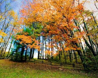 Autumn Forest at Mabry Mill Virginia Fine Art Print - Nature, Botanical, Fall, Trees, Woods, Nursery Decor, Home Decor, Zen, Gift