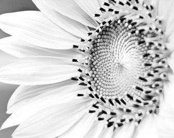 Sunflower Detail in Black & White Fine Art Print - Nature, Botanical, Wildlife, Garden, Nursery Decor, Home Decor, Baby, Zen, Gift