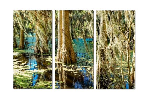 Florida Cypress Trees Canvas Triptych, 3 Panel Art, LARGE, Ready to Hang