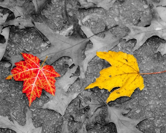 Autumn Leaves Fine Art Print or Canvas Gallery Wrap