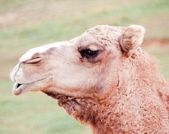 Camel with Personality Fine Art Print - Nature, Botanical, Wildlife, Garden, Nursery Decor, Home Decor, Baby, Zen, Gift