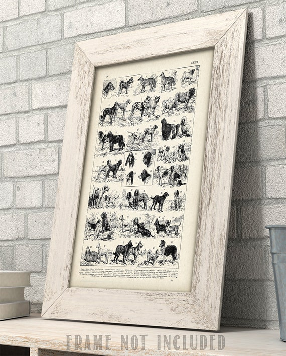 11x14 Unframed Art Print Vet Clinic Decor Antique French Dog Breed Art Print