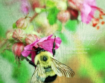 Bumblebee- Signed Fine Art Photography Print