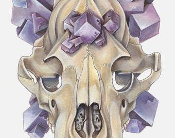 Cubic Fluorite Bear Skull PRINT