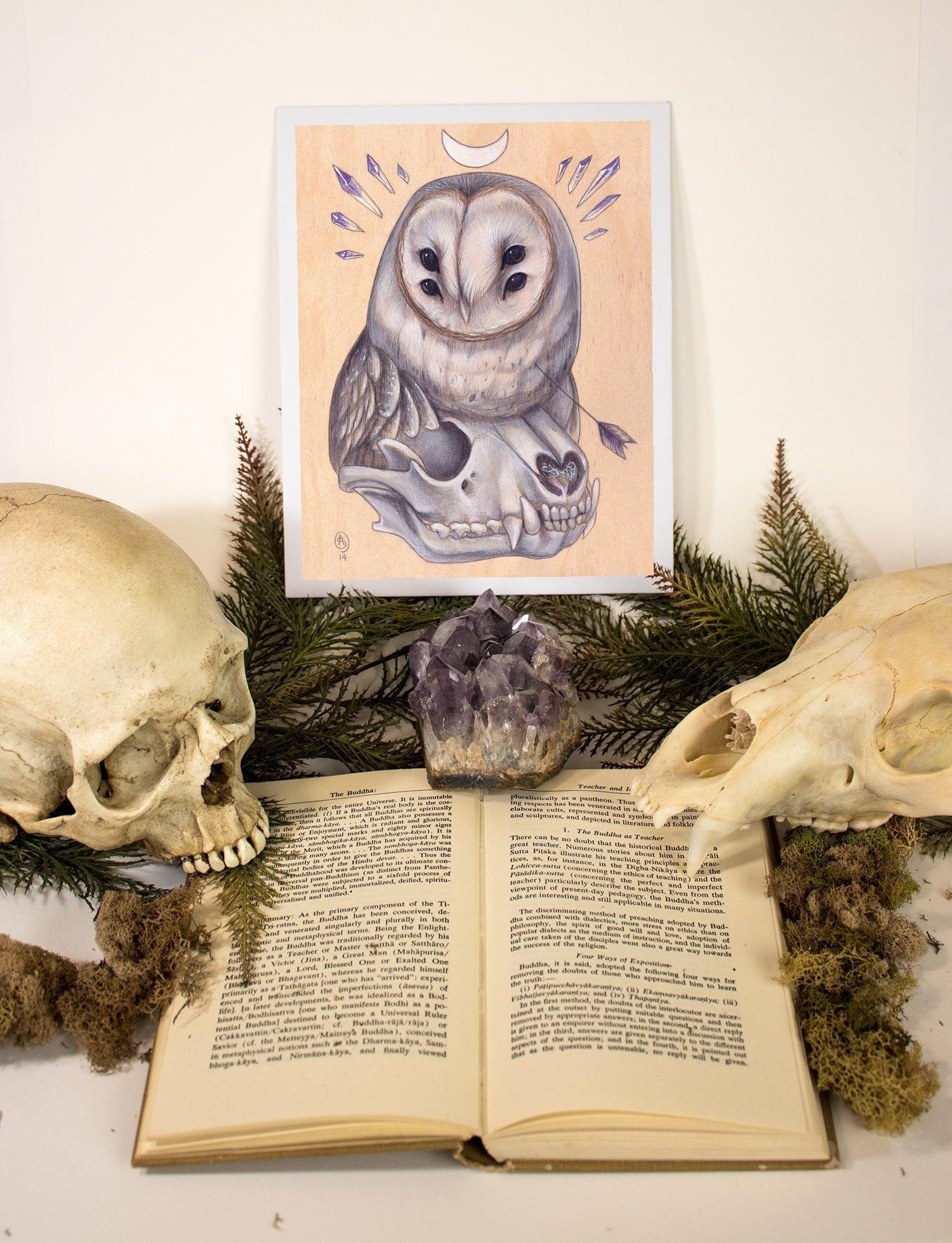 SALE Barn Owl Raccoon Skull Archery Macabre PRINT | Etsy