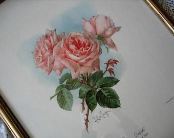 Vintage Pink Roses Print Paul de Longpre E170   Uncut Full Size   Pink Rose Print   Victorian Art   Antique Art   Vintage Rose