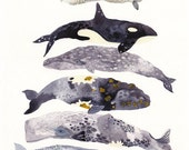 Seven Whales Stacked -  Archival Print