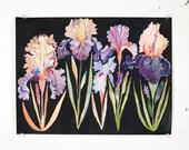"Five Bearded Irises- 8"" x 10"" archival print"