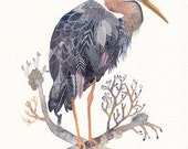 Grey Heron - Archival Print