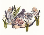 """Mourning Dove, Hydrangeas, and Snow Drops - 11"""" x 14"""" Archival Print"""
