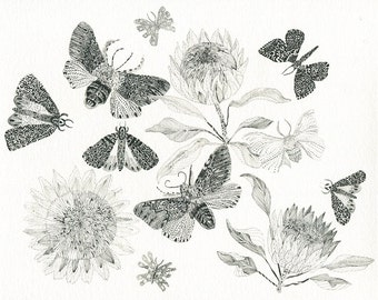 Protea and Moths- Archival print