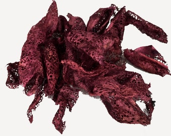 Indonesian Wild Silk Cocoons, hand dyed, burgundy, 20-30 pieces