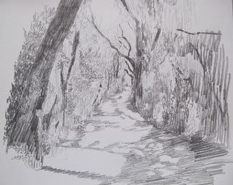 landscape drawing , daily sketch , Savannah Wildlife Preserve , alligator alley , black white and gray , expressive drawing ,pencil sketch