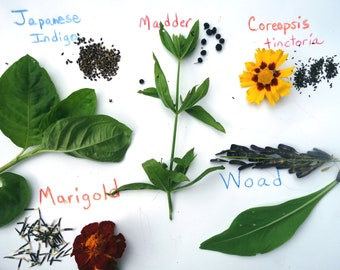 Dye Garden Seed Collection 5 Packets of Dye Plant Seeds  1 Packet Each Japanese Indigo Marigold Coreopsis Madder and Woad Natural Dye Seeds