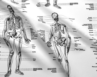 Anatomical Skeleton Etsy