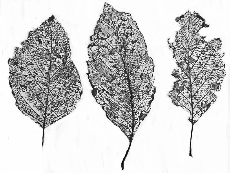 Thermofax Screen  Leaf It Three  Easy Screen Printing for image 0