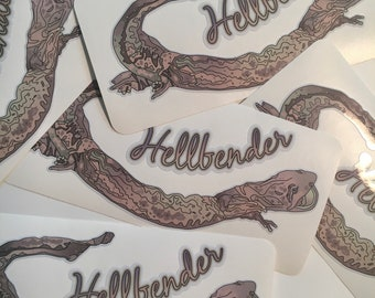 """Hellbender Salamander vinyl sticker with gloss laminate 7.5"""" wide, for inside or outside use."""