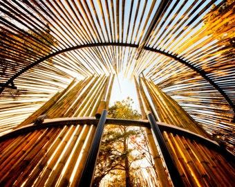 "South Korea, Anyang art park, color photograph, landscape architecture, nature photography,  ""Bamboo Rockets"""