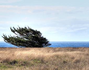 California Coastline and Tree on a Windy Day - Fine Art Print