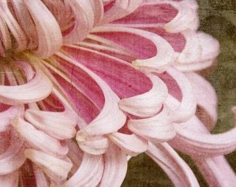 Peeling Back Seasons (12x18 fine art photographic print)
